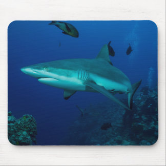 Graues Riff-Haifisch-Great Barrier Reef Mousepad
