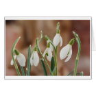 greeting card snowdrop without text karte