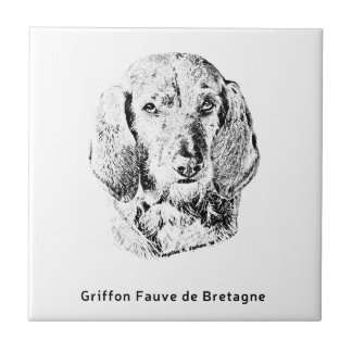 Griffon Fauve de Bretagne Drawing Fliese
