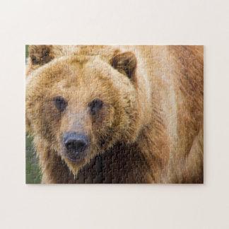 Grizzly-Bär nah genug