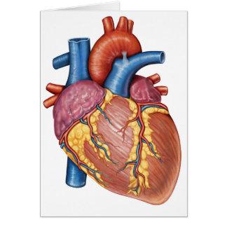 Grobe Anatomie des menschlichen Herzens Grußkarte