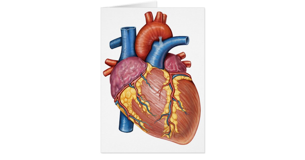 Großzügig Bild Des Menschlichen Herzens Anatomie Fotos - Anatomie ...