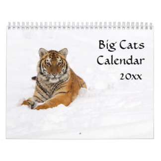 Große Katzen-Kalender Kalender