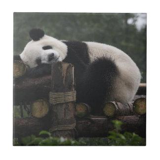 Große Pandas am großer Panda Schutz u. den 3 Fliese
