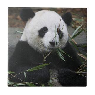 Große Pandas am Panda-Schutz Fliese