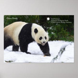 Große Pandas Smithsonian | im Schnee Poster