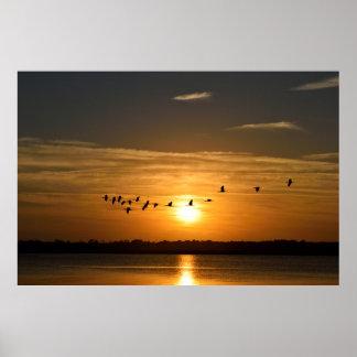 Große Reiher am Sonnenuntergang Poster