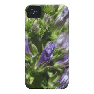 Großer blauer Lobelia (Lobelia siphilitica) Case-Mate iPhone 4 Hülle