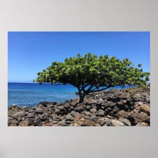 Großer Insel-Baum Poster