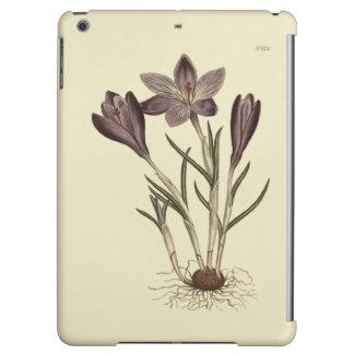 Großer lila Frühlings-Krokus-botanische