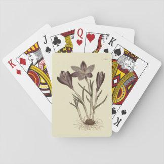 Großer lila Frühlings-Krokus-botanische Spielkarten
