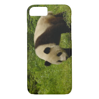 Großer Panda (Ailuropoda melanoleuca) in seinem iPhone 8/7 Hülle