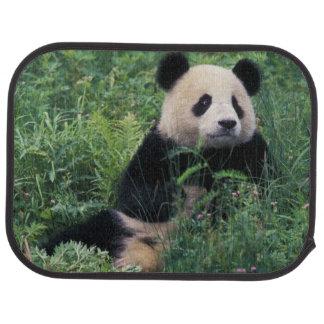 Großer Panda im Gras, Wolong Tal, Sichuan Autofußmatte