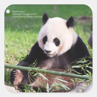Großer Panda Mei Xiang Quadratischer Aufkleber