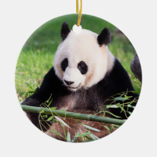 Großer Panda Mei Xiang Rundes Keramik Ornament