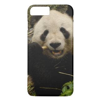Großer PandaAiluropoda melanoleuca) Familie: 5 iPhone 8 Plus/7 Plus Hülle