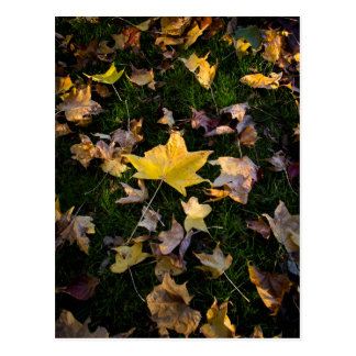 Großes Herbst-Blatt auf Gras Postkarte