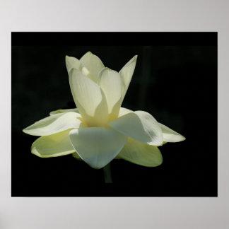 Großes weißer Lotos-Blumen-Plakat Poster