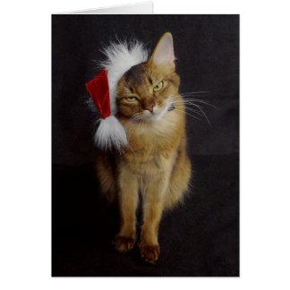 Grouchy somalische Katze im Grußkarte