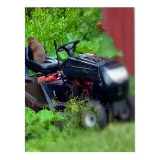 Groundhog auf einem Rasenmäher Postkarte