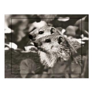 Groundhog Babys Postkarte