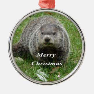 Groundhog Essen Silbernes Ornament