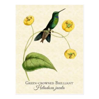 Grün gekrönte glänzender Kolibri-Vintage Kunst Postkarte