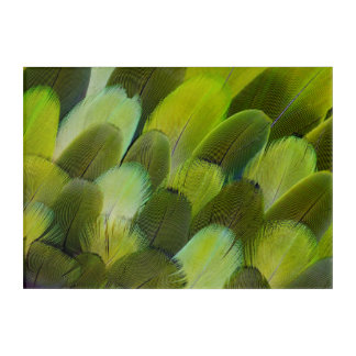 Grüne Amazonas-Papageien-Federn Acryldruck