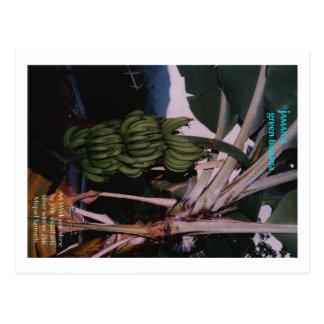 Grüne Banane Jamaika Postkarte