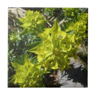 Grüne Blumen-Fliese Kleine Quadratische Fliese
