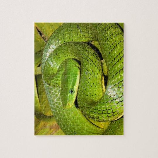 Grüne Bush-Ratten-Schlange