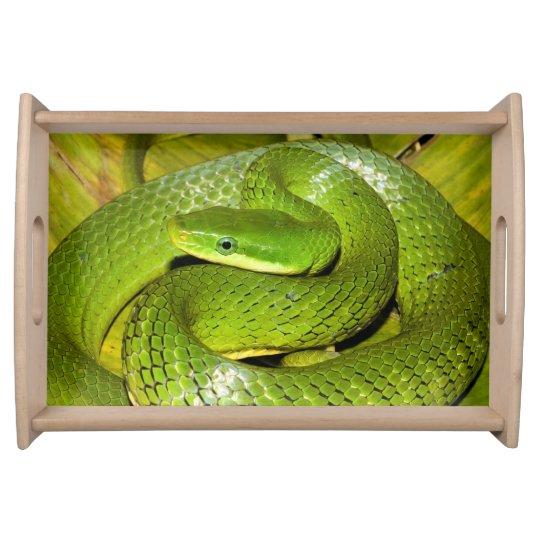 Grüne Bush-Ratten-Schlange Serviertabletts