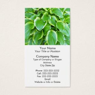 Grüne Gartenhosta-Pflanzen-botanische Gewohnheit Visitenkarte