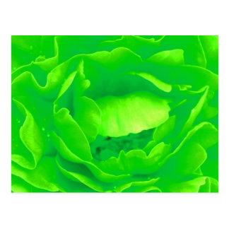 Grüne Rosen-Postkarte - kundengerecht Postkarten