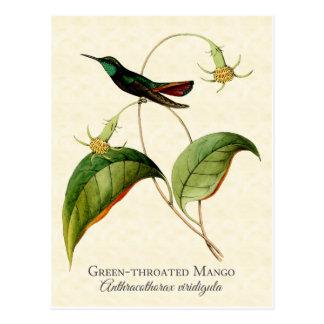 Grüne Throated Mango-Kolibri-Kunst-Postkarte Postkarte