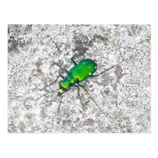 Grüne Tiger-Käfer-Postkarte Postkarte