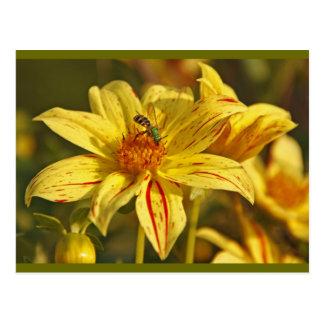 Grüne Wespe und gelbe Blume Postkarte