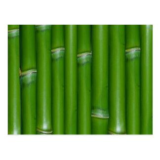 Grüner Bambus Postkarte