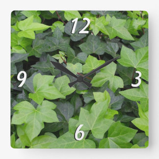 Grüner Efeu-botanischer Druck Quadratische Wanduhr