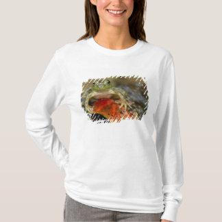 Grüner Frosch entlang der Buffalo Creek Bank, naß T-Shirt