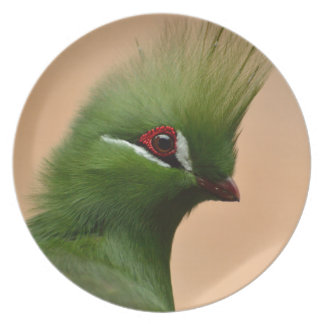 Grüner GuineaTuracovogel Teller