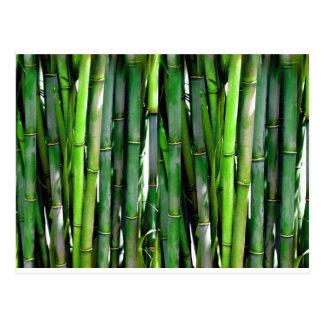 Grüner Pflanzennaturbambusdschungel Postkarte