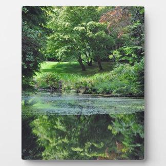 Grüner reflektierender Teich Fotoplatte