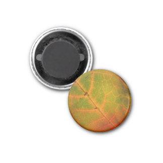 Grüner u. orange Herbst-Blatt-Magnet Runder Magnet 2,5 Cm