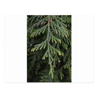 Grüner Zweig-Baum Postkarte
