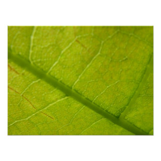 Grünes Blatt-abstrakte Natur-Fotografie Poster