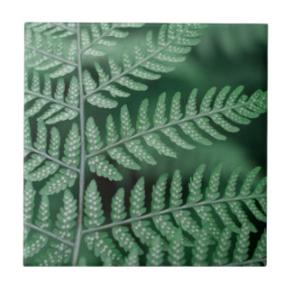 Grünes Blatt fokussiertes Foto Fliese