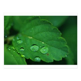 Grünes Blatt mit Waterdrops Postkarte