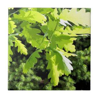 Grünes Eichen-Baum-Blätter Fliese