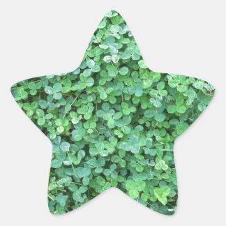 Grünes Klee-Natur-Foto Stern-Aufkleber